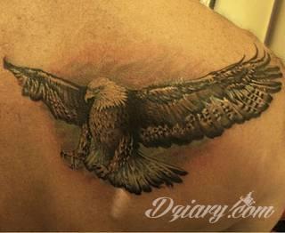 Klasyka tatuaży - szczególnie w męskim wydaniu. Orzeł, symbol wolności - ale też niekiedy patriotyzmu - to stały, chętnie wybierany wzór na tatuaż. Zazwyczaj przybiera formę silnego ptaka o rozpostartych szeroko skrzydłach.