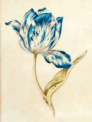 Jeden z wielu kwiatowych motywów na ciele; tatuaże eksponujące tulipany kojarzą się przede wszystkim z delikatnością. Lekkość kreski powoduje, że szczególnie urzekają na kobiecym ciele - tworzą urokliwe zdobienie każdego miejsca na skórze.