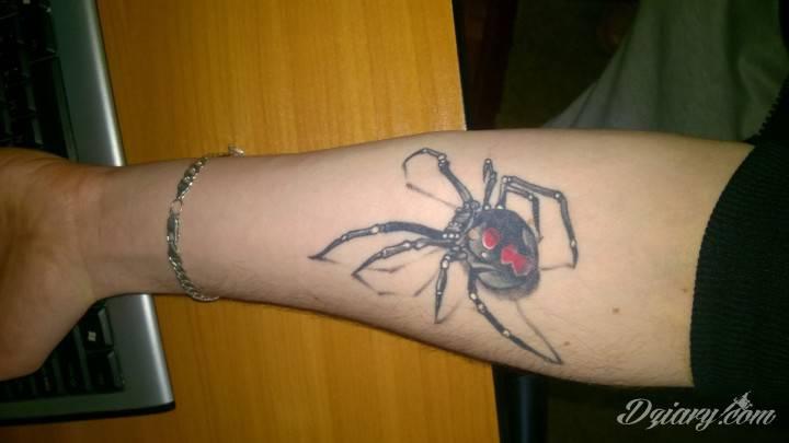 Mój pajęczak nr 1 ;]