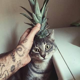 Kot z ananasem na dobry początek