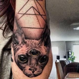 Trójoki kot na łokciu i ramieniu.