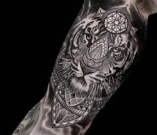 Tygrys na ręce. Autor: Coen Mitchell